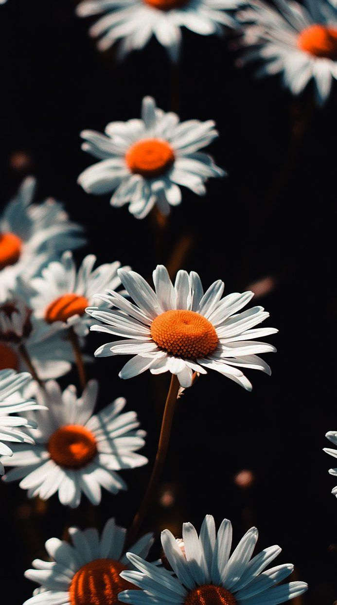 Iphone Background Tumblr Flowers Amid Gadgets And Gizmos Aplenty
