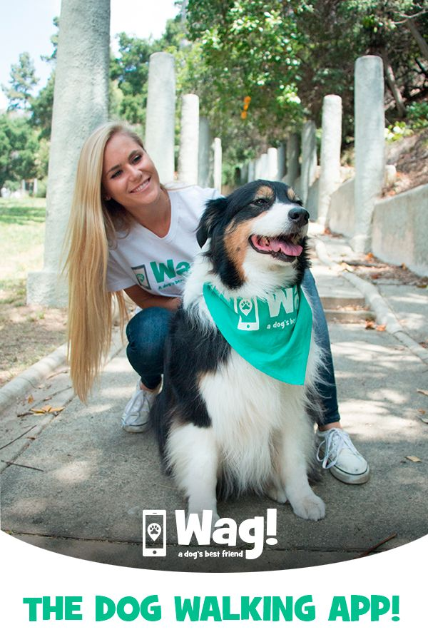Bonded & insured dog walks with experienced dog walkers!