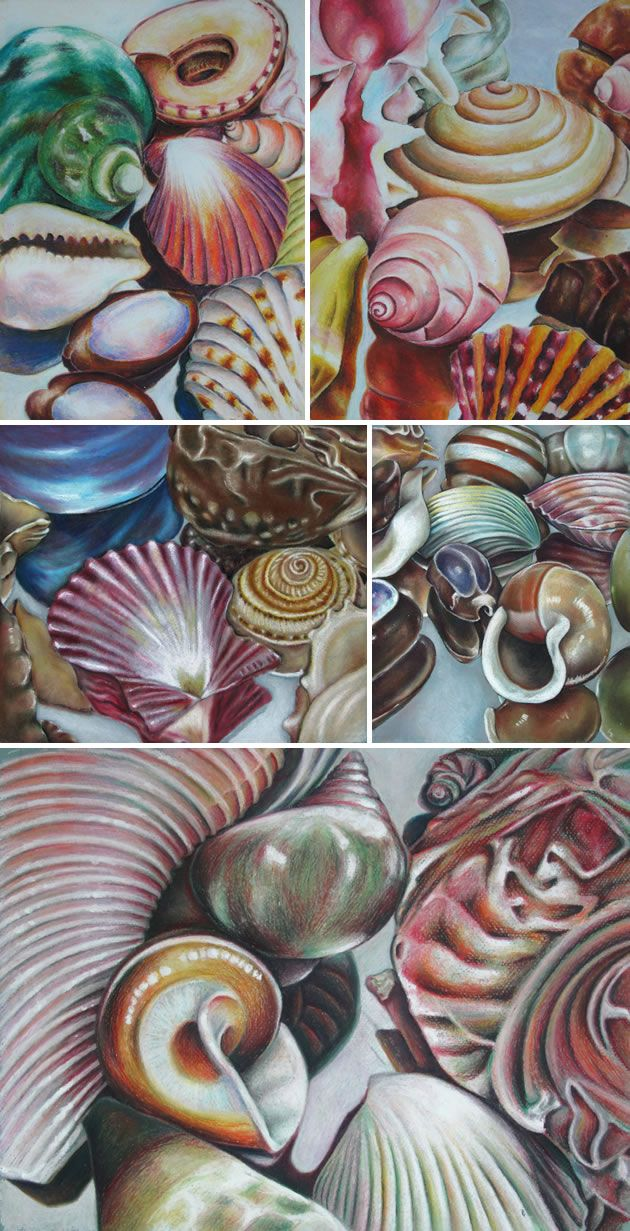 Drawing shells: art lesson