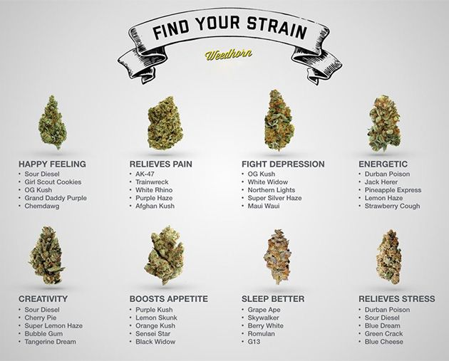 Find Your Perfect Marijuana Strain - #MMJ - http://azmarijuana.com/dans-stash/find-your-perfect-marijuana-strain/