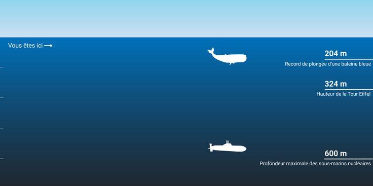 Une infographie et des chiffres sur l'immensité des océans, et plus particulièrement sur la Fosse des Mariannes qui s'enfonce à 11034 mètres de profondeur.