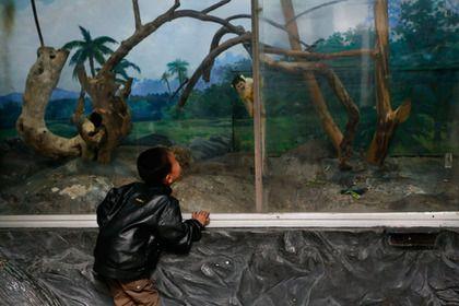 Главный зоопарк Северной Кореи, расположенный в Пхеньяне, считается одним из самых грустных зоопарков мира.   Но есть ещё кое-что, что отличает пхеньянский зверинец от любого другого - тут среди экспонируемых животных содержатся самые обычные собаки разных пород (корейские джиндо, йоркширские терьеры). Причина тому - жителям северокорейской столицы запрещено держать дома собак из соображений гигиены, и посмотреть на них можно только в зоопарке...