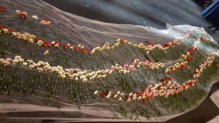 Egy gimnazista fiú mind a 834 lány iskolatársának vett virágot | 24.hu