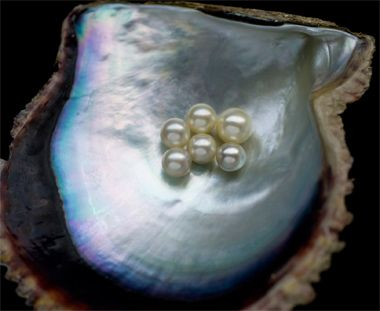 <ミキモトのパール>1893年、創業者である御木本幸吉が世界で初めて真珠の養殖に成功、今年で120年を迎えるミキモト。「世界中の女性を真珠で飾りたい」という幸吉翁の願いは世界の女性の美しさに確実に貢献していると思います。写真協力:ミキモト【25ans編集長 十河ひろ美】    http://lexus.jp/cp/10editors/contents/25ans/index.html    ※掲載写真の権利及び管理責任は各編集部にあります。LEXUS pinterestに投稿されたコメントは、LEXUSの基準により取り下げる場合があります。