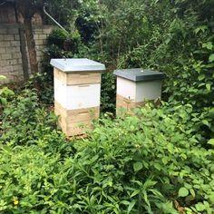 Bienen halten in der Praxis