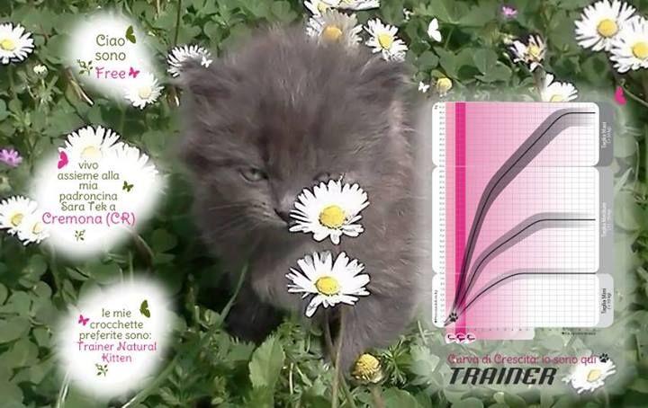Ciao a tutti! Sono Free e nella foto sono ancora piccolo (ora ho già 4 mesi). Vivo a Cremona (CR) assieme alla mia padroncina Sara Tek che mi prepara sempre le mie crocchette preferite: Trainer Natural Kitten! Un saluto a tutti!