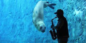 Casey, un léopard de mer en captivité, a dû être euthanasié