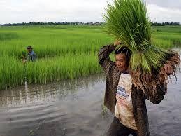 3 Opsi Yang Harus Dilakukan Pemerintah Untuk Kesejahteraan Para Petani, untuk informasi lebih lengkap lihat aja disini http://carahijau.blogspot.com/2013/12/tiga-opsi-untuk-kesejahteraan-para-petani.html
