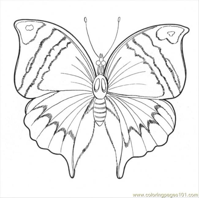 166 best vlinders en insecten images on pinterest   coloring books ... - Advanced Coloring Pages Butterfly