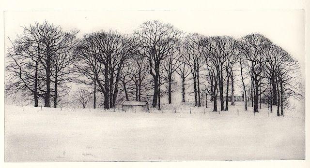 Pamela Grace trees