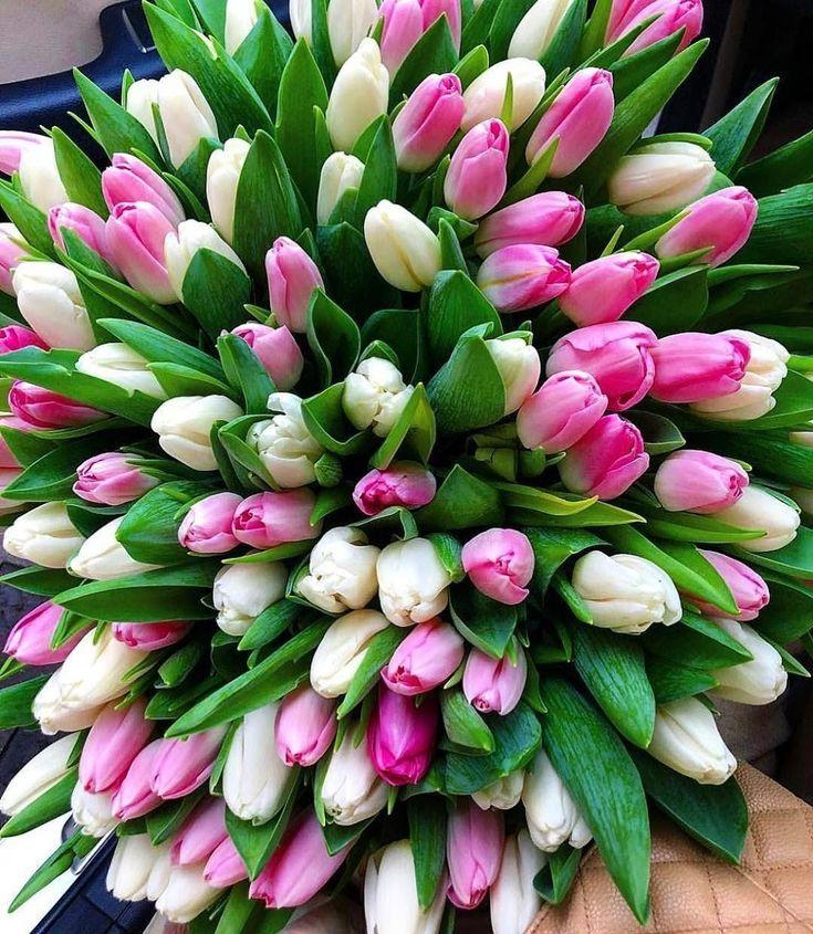 много тюльпанов в букете картинки более