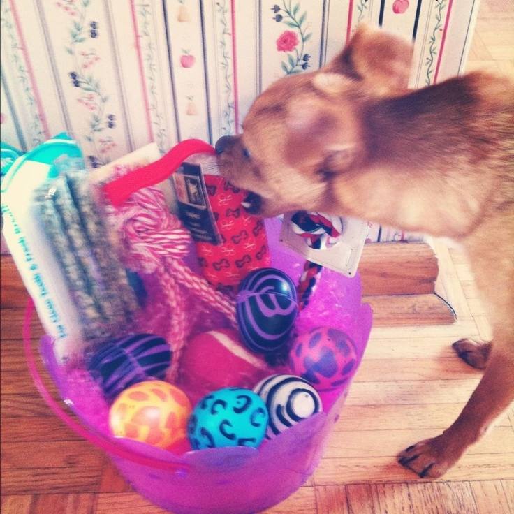 30 best judes easter images on pinterest adorable animals dogs my dogs easter basket last year cant wait for this negle Image collections