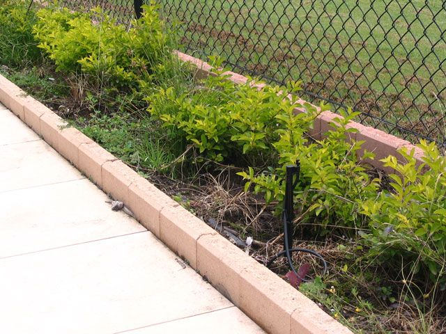 cinder blocks for borders | Garden Edging Images