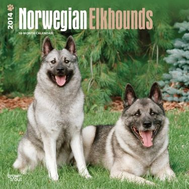 Norwegian Elkhound