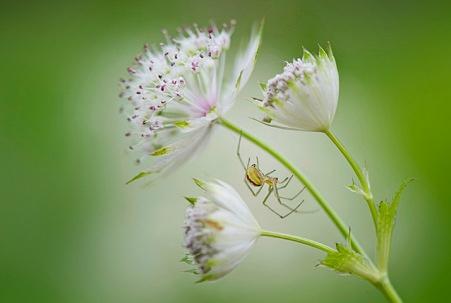 Erilaisia Kukkia