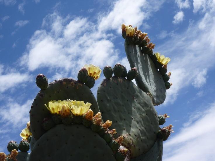 A huge cactus