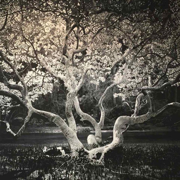 Joshua Yeldham - Morning Tree...