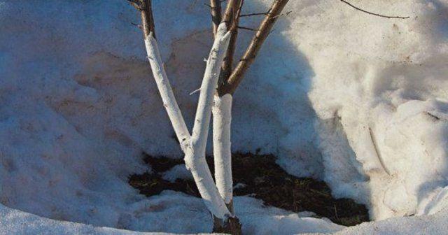 Чем можно обработать сад от болезней и вредителей ранней весной | Уход за садом (Огород.ru)