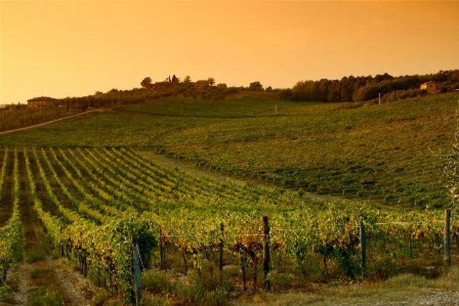 Enoteca Pozzo Divino - A Firenze in Via Ghibellina 144/R degustazione di vini.