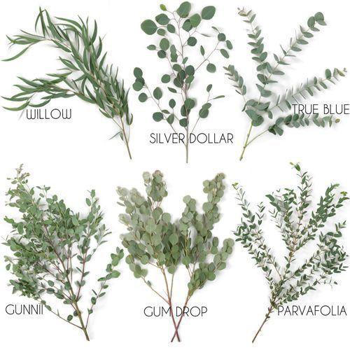 Arten des Eukalyptusgrüns – Blatt für Kränze und Blumensträuße. Floristik-Tipps
