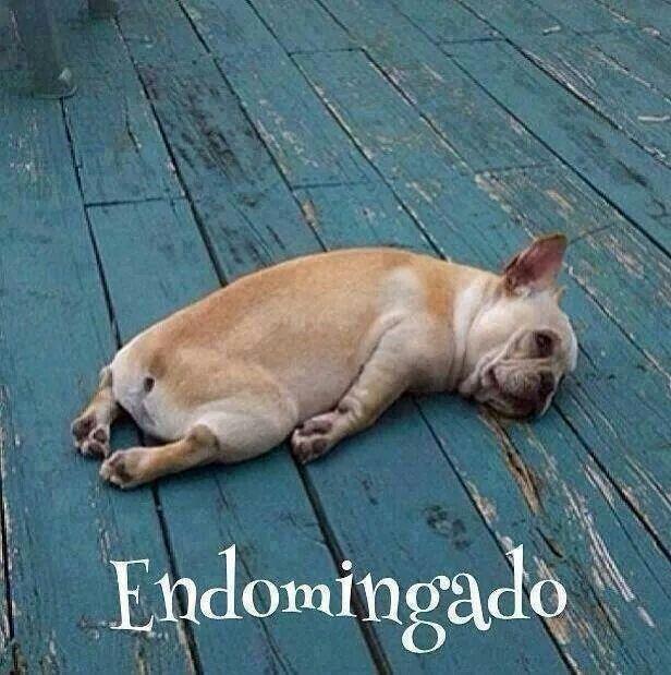 """Bom dia e um ótimo domingo! """"Endominago"""""""