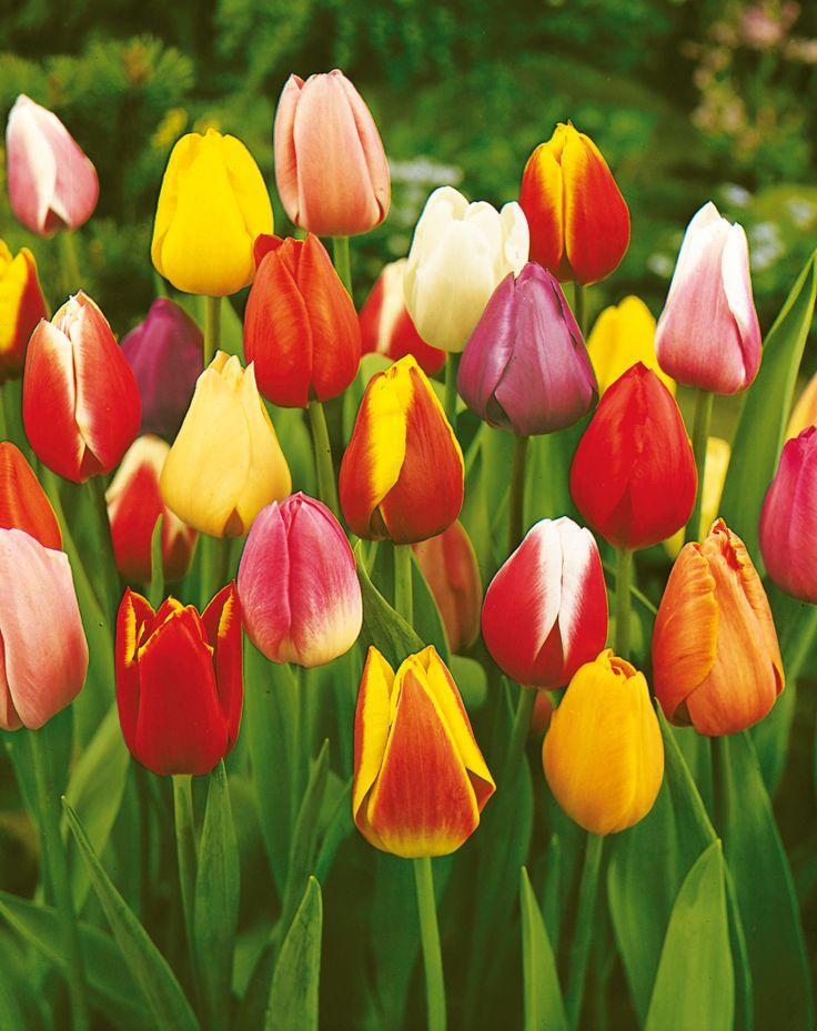 76 besten obi flower power bilder auf pinterest - Obi fensterbank ...