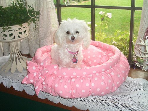 adorable doggie bed