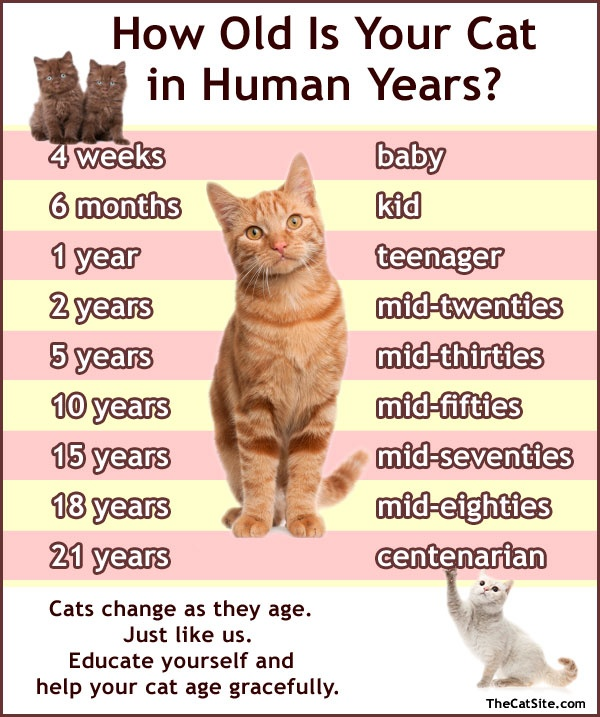 """There is no """"cat year = X human  years"""" formula, but here's a rough estimate."""