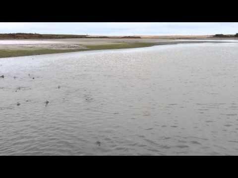 Amazing shark footage captured at #RSPB reserve!