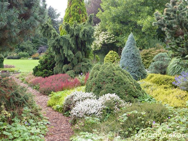 103 best Conifer borders images on Pinterest | Landscaping ...