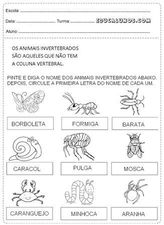 atividades animais vertebrados e invertebrados 3o ano - Pesquisa Google