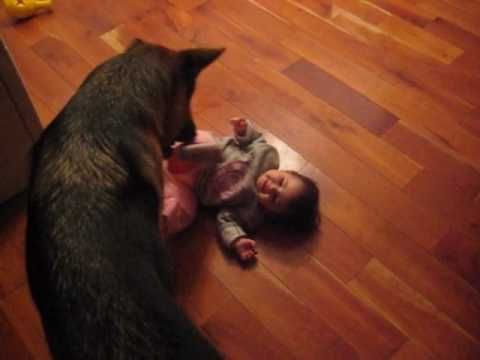 "Who says that Bully dogs are mean? It's all in how the ""OWNER"" trains them ! Love this video"