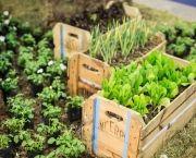 Como Fazer Horta Em Caixote (2)