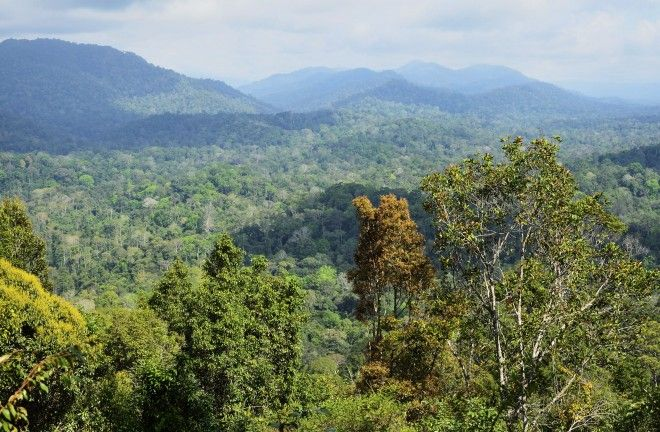 The interior - Peninsular Malaysia's interior comprises a vast swathe of territory, stretching northeast of Kuala Lumpur all the way up to Kota Bharu on the east coast. Until recent times this was a remote region of steep, …