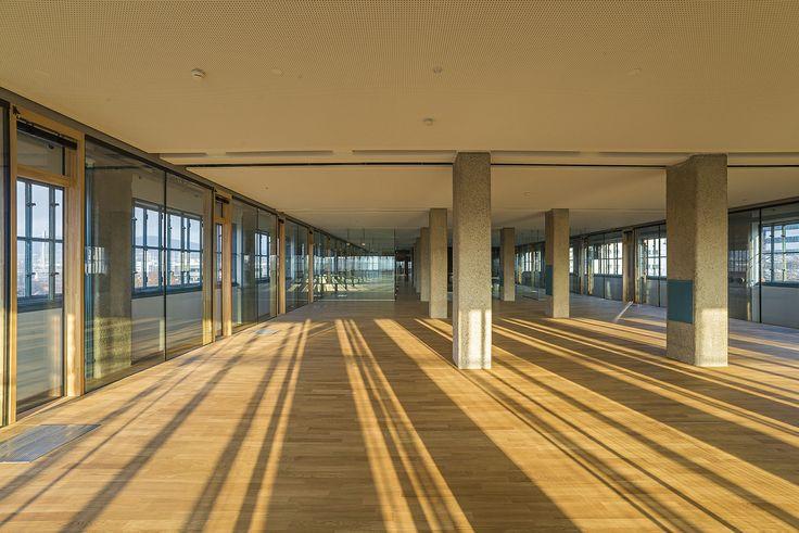 Tabakfabrik Linz: Mit Fenstern nach allen Himmelsrichtungen wirkt das neue Zuhause von Netural durchgehend hell und offen.