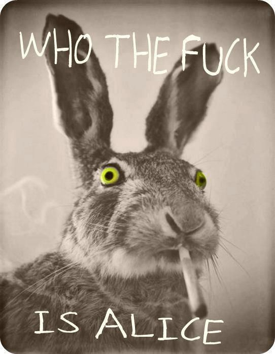 Who the fuck is Alice   Anonymous ART of Revolution