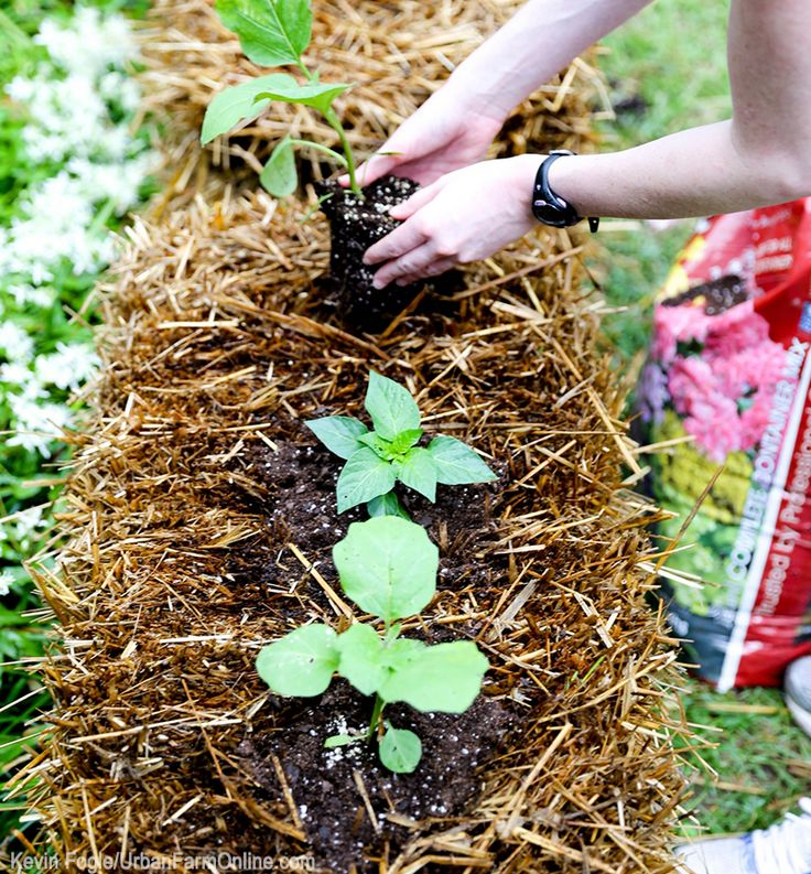 4 Reasons to Start a Hay-Bale Garden - Photo by Kevin Fogle (UrbanFarmOnline.com)