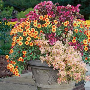 Best Ideas for Fall Container Gardening | Cheery Chrysanthemums | SouthernLiving.com