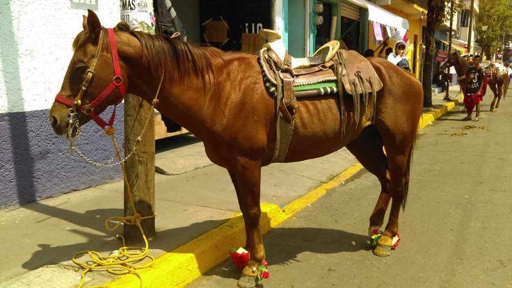 Los caballos; la otra cara de la representación de Iztapalapa | Diario de México| Diario de México |