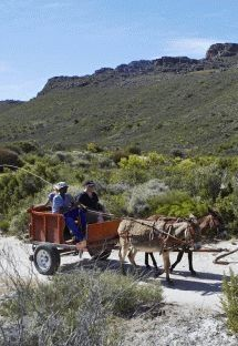 Cederberg Heritage Route - Cederberg. We offer three- or four- night 'slackpacking' hiking trails for young and old in the superb Cederberg mountains, escorted by local community guides. Stay in local community fully catered guesthouses/B Includes donkey cart rides, swimming in rock pools, visits to rock art sites.