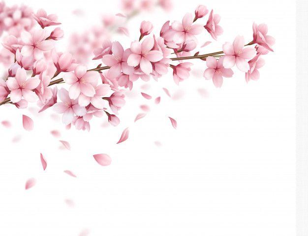3ft X 3ft Cherry Blossom Branch Photography Backdrop Tree Limb Photo Backdrop Flowers Viny Cherry Blossom Branch Cherry Blossom Art Cherry Blossom Vector
