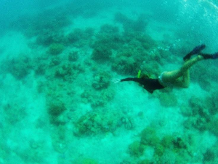 Bali, looking for fish  Photo: Lisbeth Westergaard Hansen