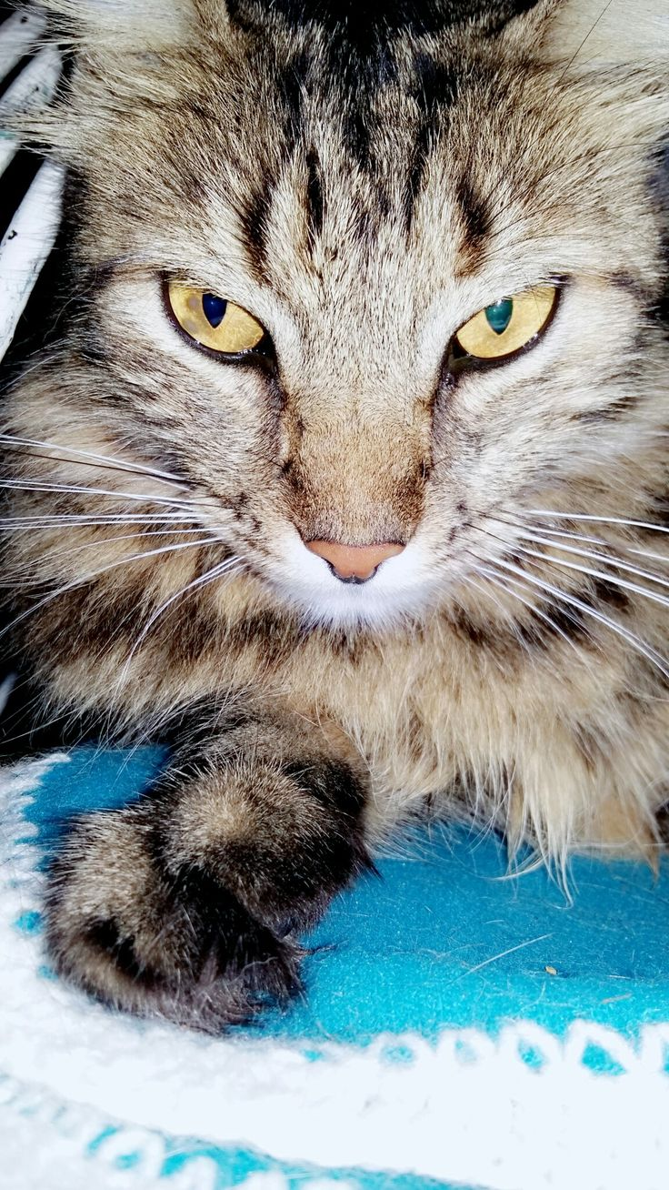 Pin de Amanda Akashi em gatos
