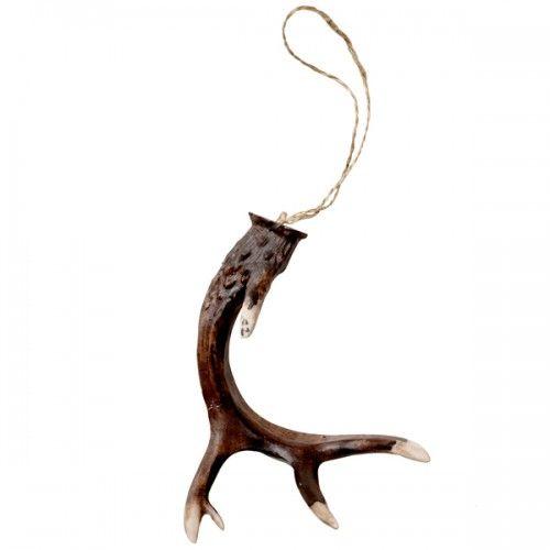 Antlers, Brown