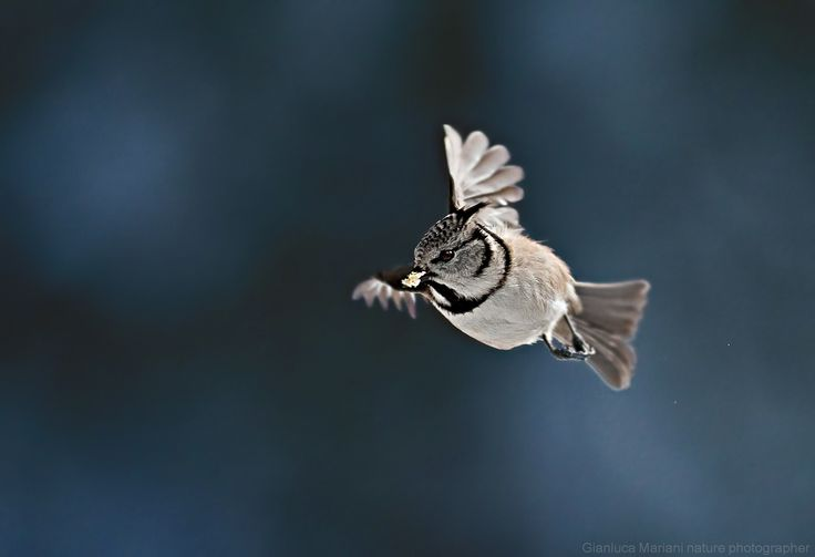 Fly away by Gianluca Mariani Nature Photographer natura 2.8 on 500px