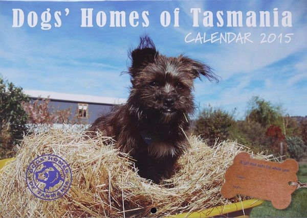 The Dogs' Homes of Tasmania 2015 calendar is out now. $12 each, available at selected retailers (listed in article). Article for think-tasmania.com