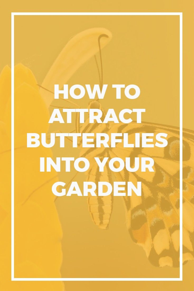153 best gardening on a budget images on pinterest