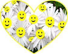 Happy, Face, Daisy, Flowers, Smiley
