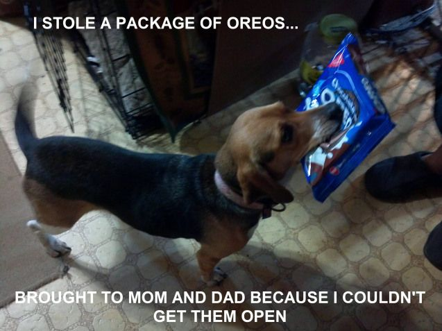 Someone teach this dog to get them beer! (or milk! lol)  dog shaming.