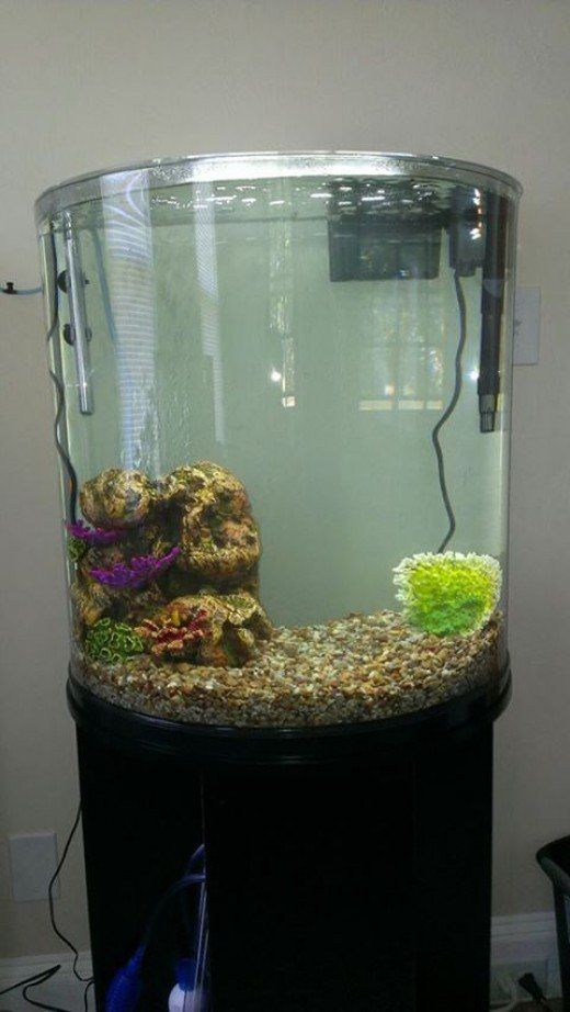 A Comprehensive Guide To Help Beginners Wet Up Their First Freshwater  Aquarium.